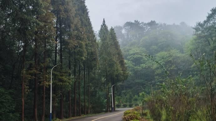 大山冲森林公园