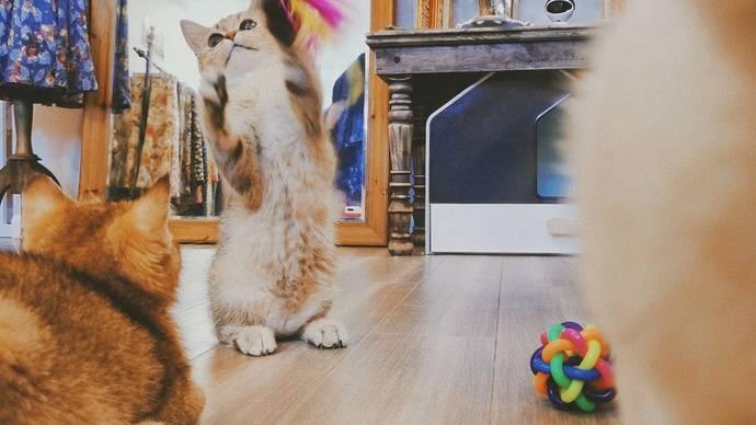 猫吔Cat&Vintage